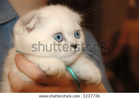 White Kitten - stock photo
