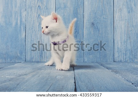 White kitten with white chest. White cute kitten. Sweet adorable kitten on a serenity blue wood background. Small cat. Funny kitten with copyspace - stock photo