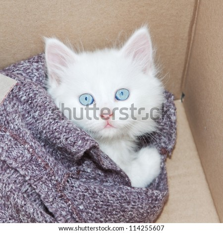 White kitten wrapped in a box. - stock photo