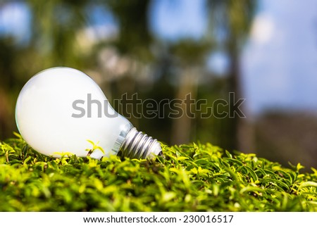 White light bulb on plant, inspired by nature, energy saving, innovative idea for environment concept - stock photo