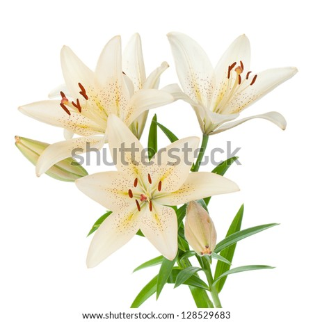 White lily bouquet. Isolated on white background - stock photo
