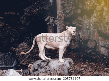 White Lion hitters standing posture - stock photo
