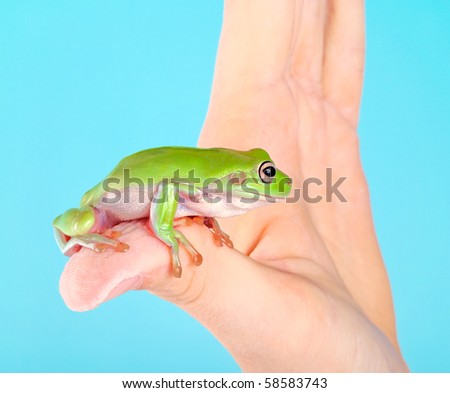 White-lipped tree frog sitting on a boy's hand - stock photo