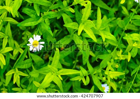 White little flower on green leaves wall background - stock photo