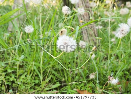 White little flowers on the green glasses,close up. - stock photo