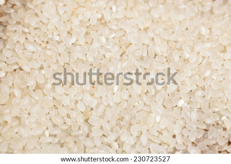White long rice background, uncooked raw cereals, macro closeup - stock photo
