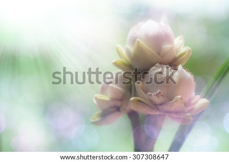 White lotus flower; The lotus is one of the most well-known symbols of Buddhism - stock photo