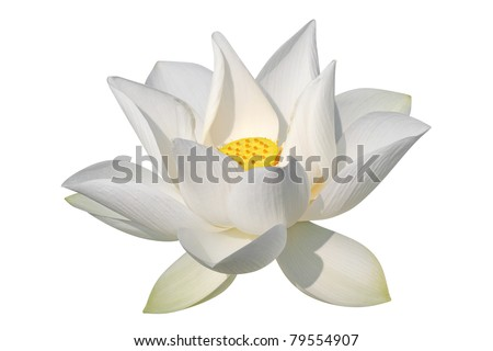 White lotus, isolated, clipping path included - stock photo