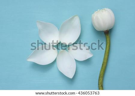 White lotus leave arrangement in flower shape on blue background - stock photo