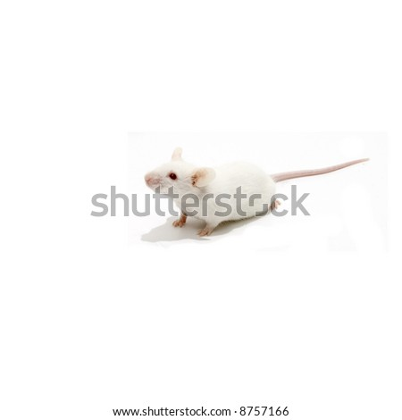 White mice isolated over white - stock photo