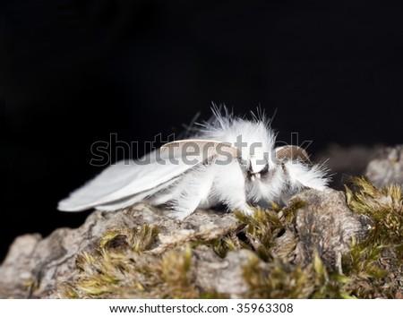 White moth. Macro photo. - stock photo