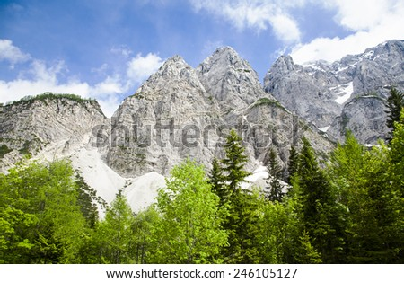 White mountains and evergreen coniferous trees - stock photo