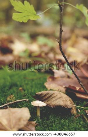 White Mushroom Moss - stock photo