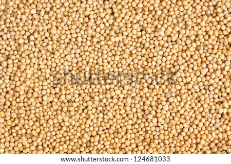 White mustard seeds, for backgrounds or textures - stock photo