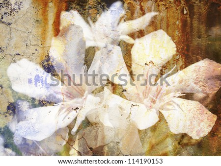 white oleander - stylized floral picture with patina texture - stock photo