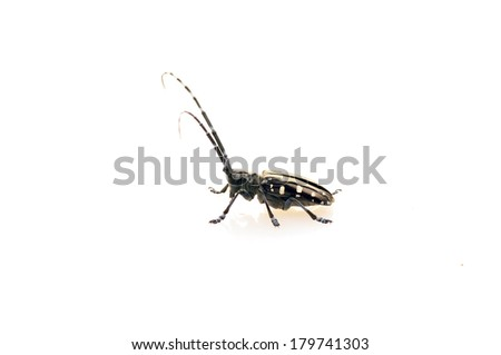 White on the background of longicorn, close-up pictures,   - stock photo