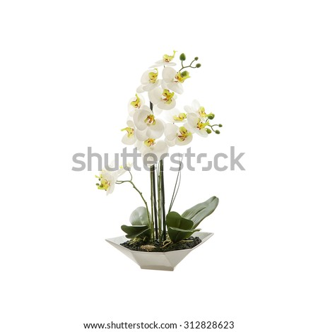 White orchid flower, phalaenopsis in a pot isolated on white background - stock photo