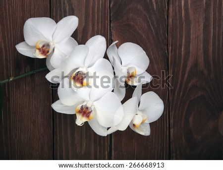 white orchid flowers on the wood background top view - stock photo