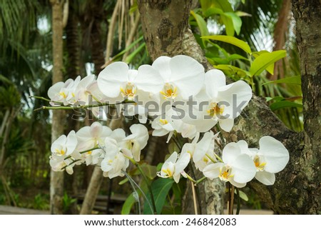 White orchid flowers on trees - stock photo