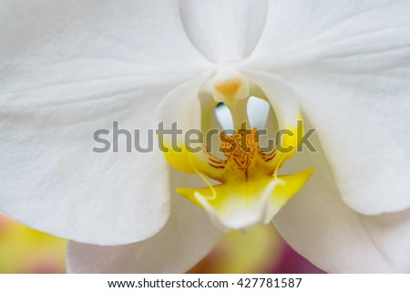 white orchid in the garden. - stock photo