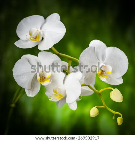 white orchid on the green - stock photo