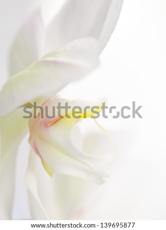 White orchid on white background with copy space - stock photo