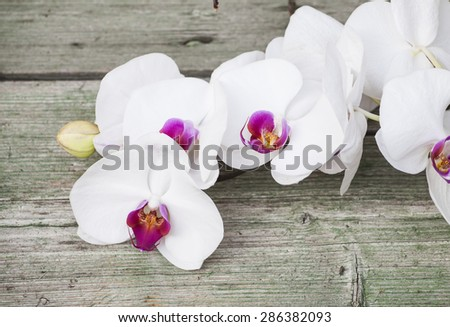 White orchid on wooden background - stock photo