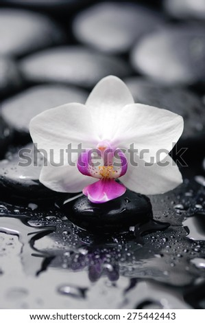 White orchid with black stones on wet background - stock photo