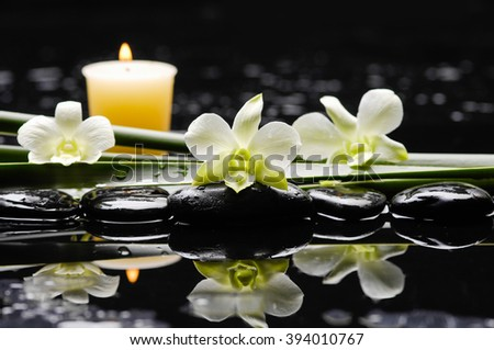 White orchid with stones and green plant - stock photo