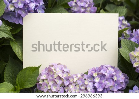 White paper note in hydrangea flowers - stock photo