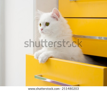 White persian kitten peeks out of the yellow drawer cabinet - stock photo