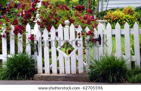White picket fence fends off the overflow of red roses blooming in this homes yard.  Diamond architecture in garden gate adds a unique flair this this sidewalk attraction. - stock photo
