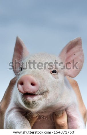 White piglet in girls hands smiling - stock photo
