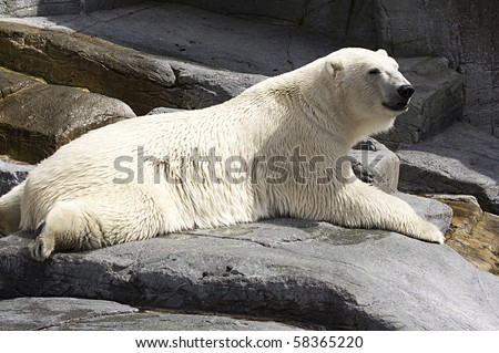 White polar bear - stock photo