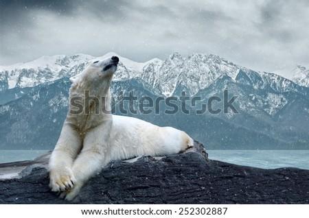 White polar bear on the ice - stock photo
