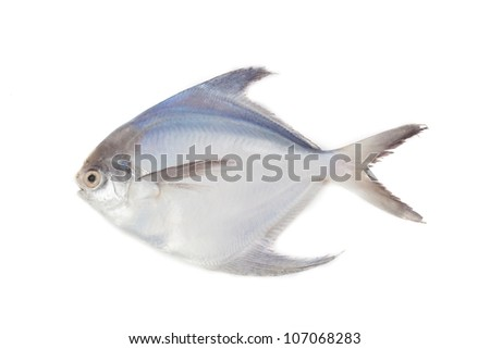 White Pomfret On isolate - stock photo