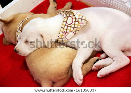 White puppy lovely is sleeping. - stock photo