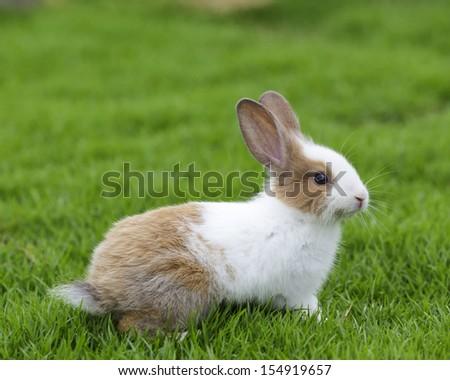 white rabbit sitting on grass - stock photo