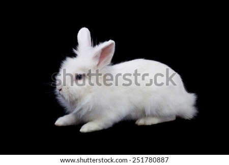 White rabbit with fluffy hair isolated on black - stock photo