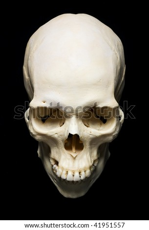 white real Skull with black background - stock photo