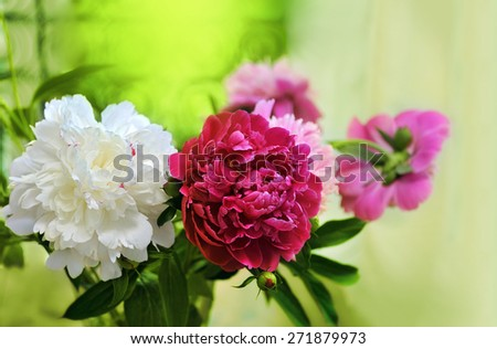 white, red, pink peonies on the window sill - stock photo