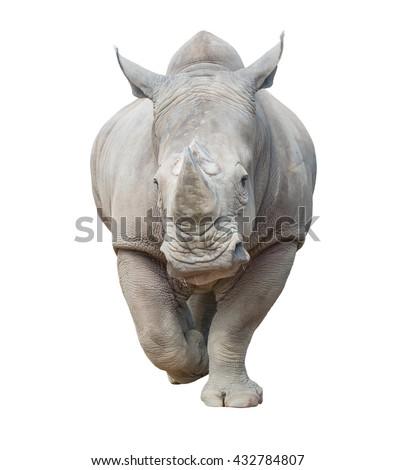 white rhinoceros, square-lipped rhinoceros isolated on white background - stock photo