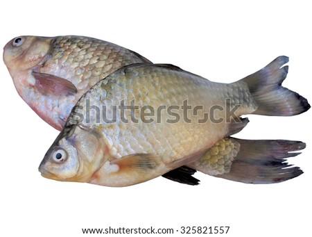 White, river, crucian, fish, fishing, carp, isolated, tail, fin, animals. - stock photo