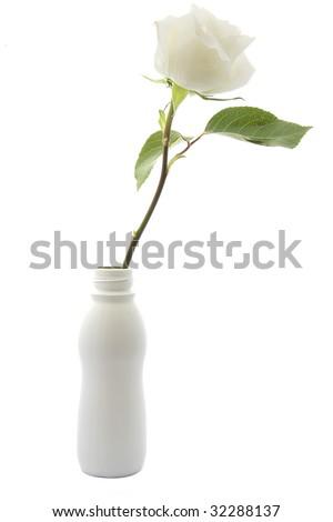 white rose on white background isolated - stock photo
