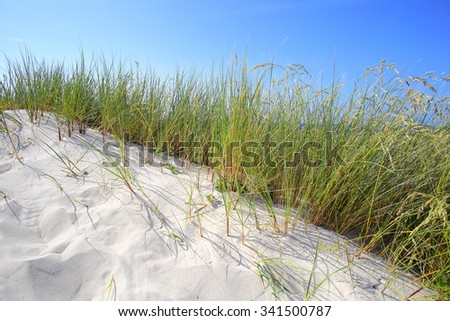 White sand dunes with grass and blue sky - stock photo
