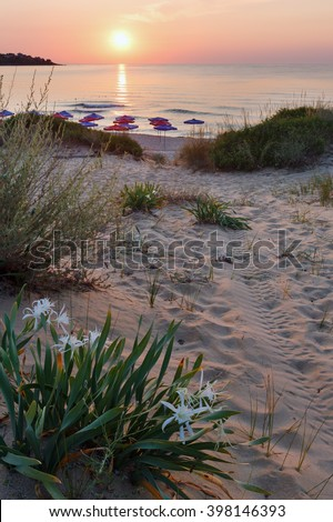 White Sand Lilies on sandy sunset beach. - stock photo