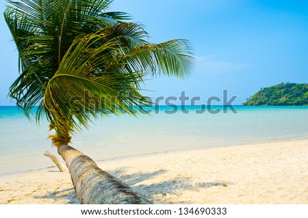 White sand tropical beach with palm tree on foreground - stock photo