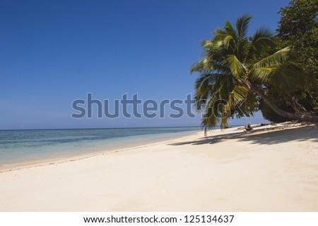 White sandy beach with palmtree - stock photo