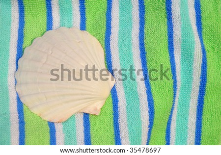 White scallop shell, room for copy space - stock photo