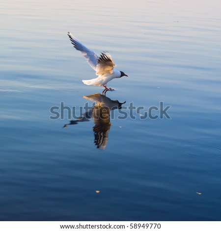 White seagull hunting on the sea - stock photo